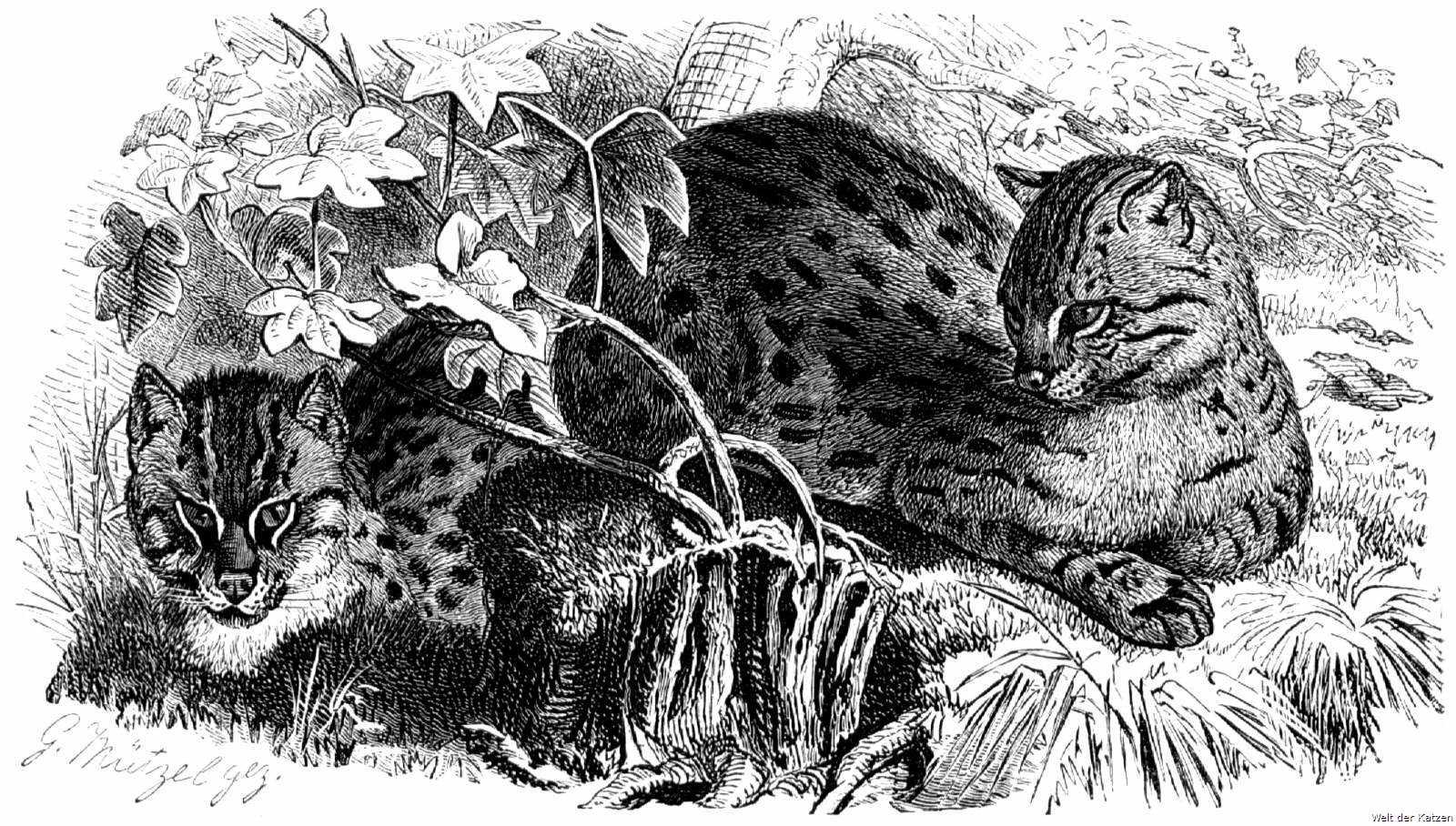 können füchse katzen gefährlich werden