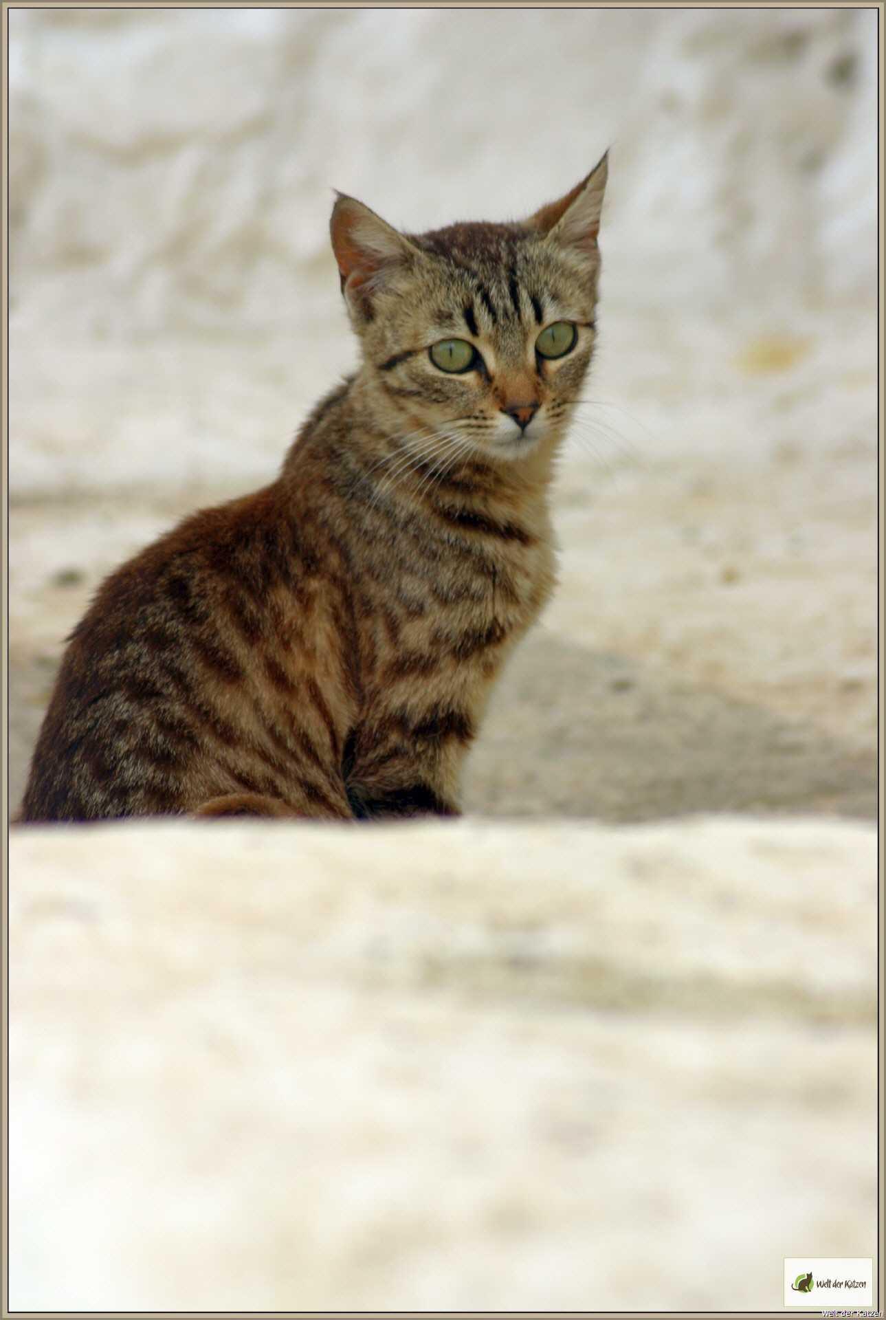 Welt der Katzen - Katzenhaltung | Exotische Katzen