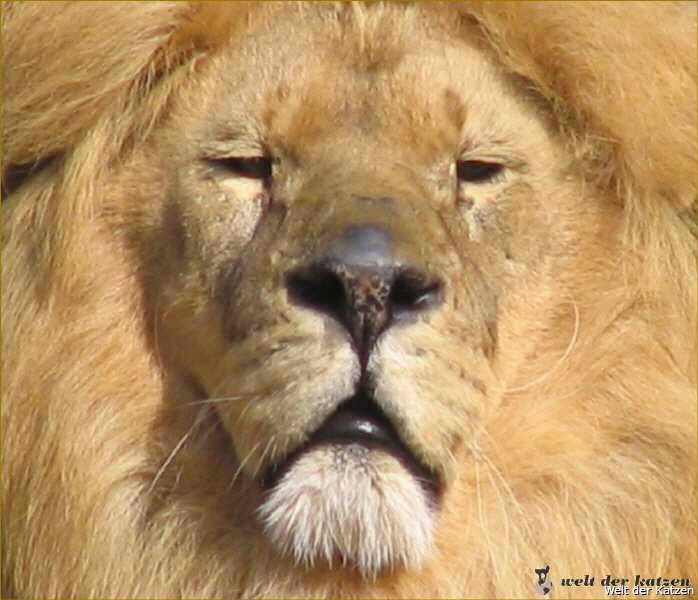 leos wilde welt