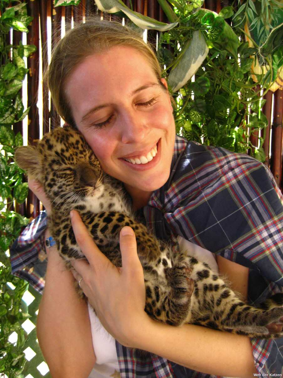 Welt Der Katzen Der Leopard Fortpflanzung