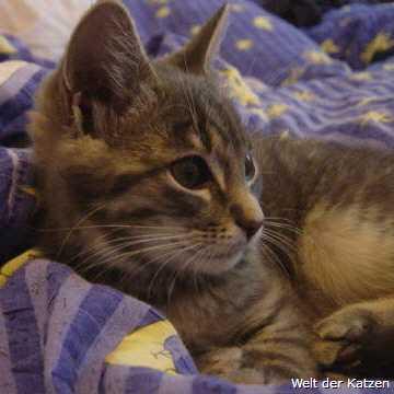 Welt der Katzen - Lebenserwartung der Katze